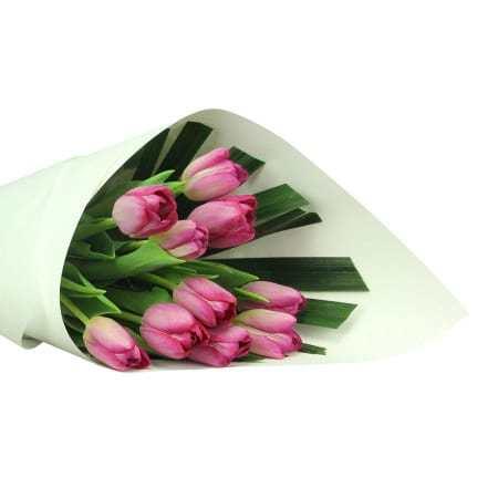 Luscious Purple Tulips (10 Stems)