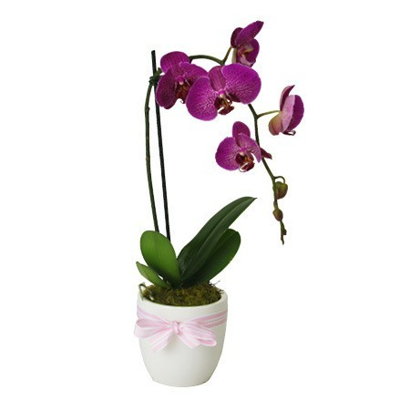 Mothers Day Orchid Plant in Pink