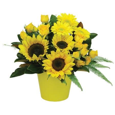 Sunshine Flower Pot