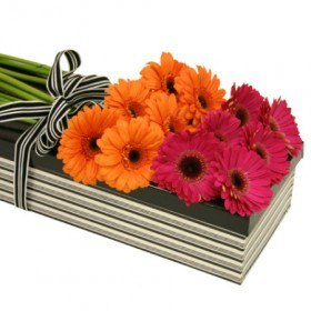 Summer - Boxed Flowers