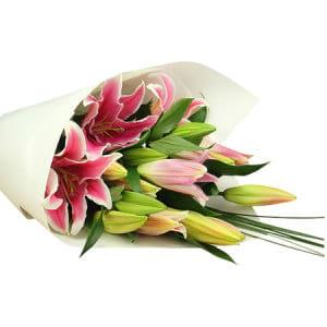 Oriental Pink Lilies