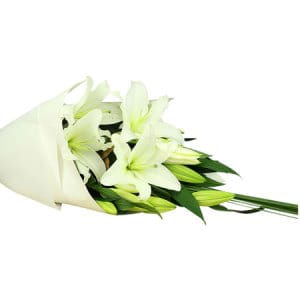 Oriental White Lilies