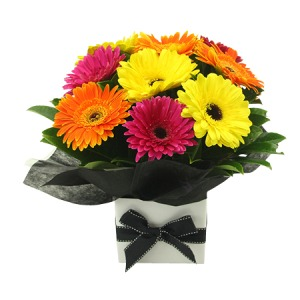 Gerbera Gift Arrangement