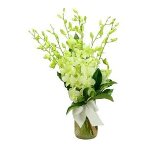 White Singapore Orchid Posy
